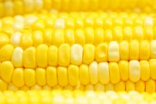 Free Corn Close-up. Stock Image - 19692331
