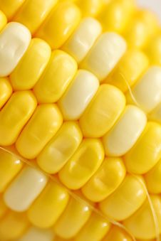 Free Corn Close-up. Stock Image - 19692431