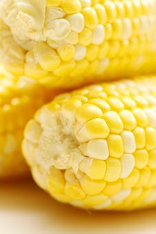 Free Corn Close-up. Royalty Free Stock Photography - 19692467