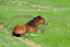 Free Baby Horse On Grass Royalty Free Stock Image - 19692746
