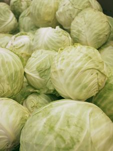 Free Fresh Cabbages Stock Image - 19692751