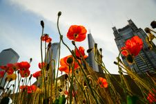 Free Flowers And Banking Buildings Stock Images - 19693084