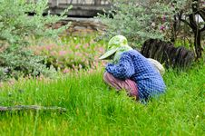 Farmer Working In The Field Stock Photography