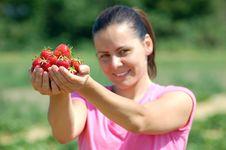 Free Fresh Picked Strawberries Stock Photos - 19693453