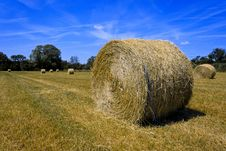 Free Haystack Freshly Cut Royalty Free Stock Photography - 19695927