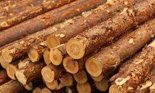 Free Logs Royalty Free Stock Photo - 19699575