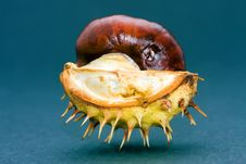Free Chestnut Isolated Stock Photos - 19699813