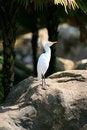 Free White Bird Royalty Free Stock Photo - 1971525