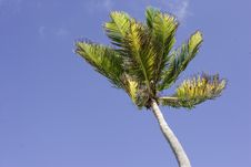 Free Palm Tree In The Wind Royalty Free Stock Image - 1970086
