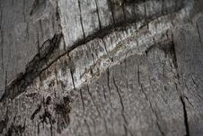 Free Close Up Of A Plam Tree Stock Images - 1970184