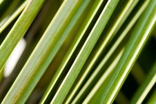 Free Palm Tree Leaf Stock Photos - 1970193
