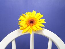 Free Yellow Gerbera Daisy Royalty Free Stock Photos - 1971588
