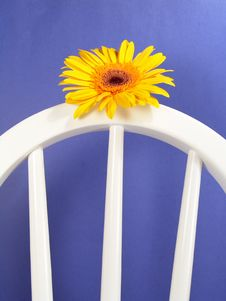 Free Yellow Gerbera Daisy Stock Photo - 1971600