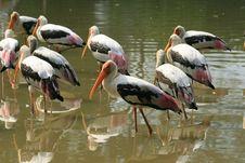 Free Stork Group Stock Photo - 1971900