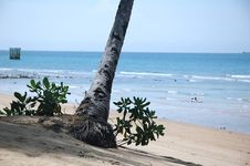 Root Of Tree On Tropical Beach Royalty Free Stock Images