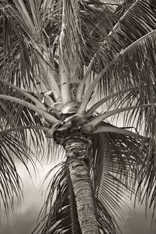 Free Palms In Tropical Settings Stock Image - 1972721