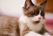 Free Kitten Royalty Free Stock Photo - 1972995