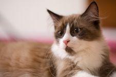 Free Kitten Stock Image - 1973001