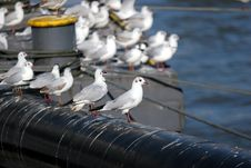 Free Gulls On A Pier Royalty Free Stock Images - 1973079