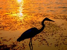 Free Heron At Sunset Royalty Free Stock Photography - 1973637