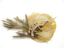 Free Dry Branch And Decorative Sheet With The Lizard Stock Photography - 1974172