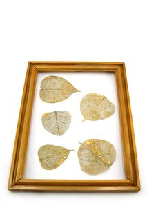 Free Leaves In A Framework Royalty Free Stock Photo - 1974235