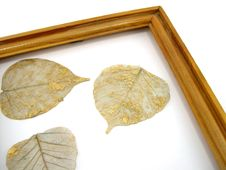 Free Leaves In A Framework Royalty Free Stock Photography - 1974237