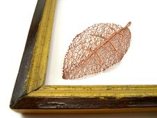 Free Leaves In A Framework Royalty Free Stock Images - 1974239