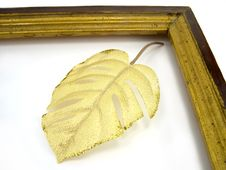Free Leaves In A Framework Stock Images - 1974244