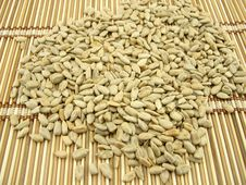 Free Sunflower Seeds Stock Photography - 1974292