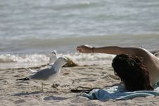Bird Feeding At Beach,by Young Girl Royalty Free Stock Image