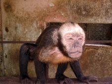 Free Monkey Stock Photography - 1974532
