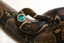 Free Snake With The Ring Royalty Free Stock Images - 1974569
