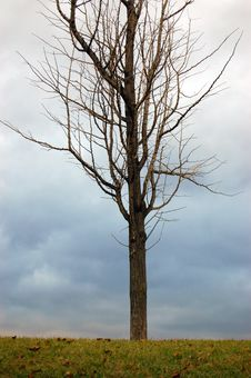 Free Naked Tree In Ominous Clouds Royalty Free Stock Images - 1975729