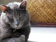 Free Cat Nap Stock Photo - 1976070