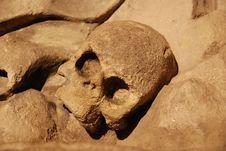 Free Skull Royalty Free Stock Photo - 1976165