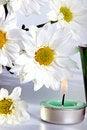 Free Simple White Daisies Stock Image - 19707081