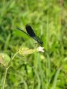 Free Blue Dragonfly Stock Image - 19707191