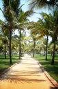 Free Palm Tree Trail Stock Image - 19707501