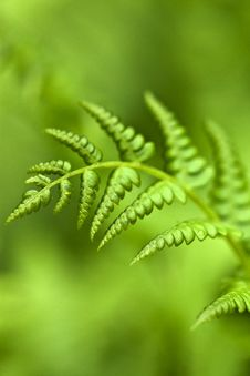 Free Green Fern Stock Photography - 19702072