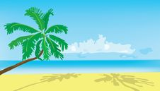 Free Background. Summer. A Green Palm Tree On A Beach. Stock Images - 19702264