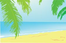 Free Background. Summer. A Green Palm Tree On A Beach. Royalty Free Stock Photo - 19702275
