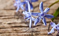 Free Woodland Spring Flowers Stock Photos - 19702933
