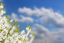 Free Branch With White Flowers Stock Photos - 19703003