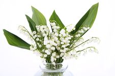 Free Lily Of The Valley Royalty Free Stock Photos - 19703868