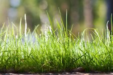 Free Fresh Green Grass Background Stock Image - 19704451