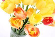Free Tulips Stock Photos - 19705033