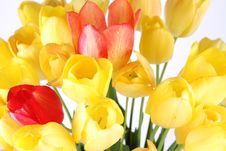 Free Tulips Royalty Free Stock Images - 19705179