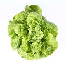Free Lettuce Royalty Free Stock Photo - 19705395
