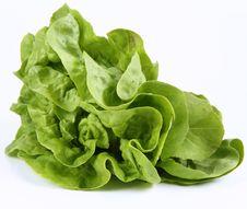 Free Lettuce Stock Image - 19705411